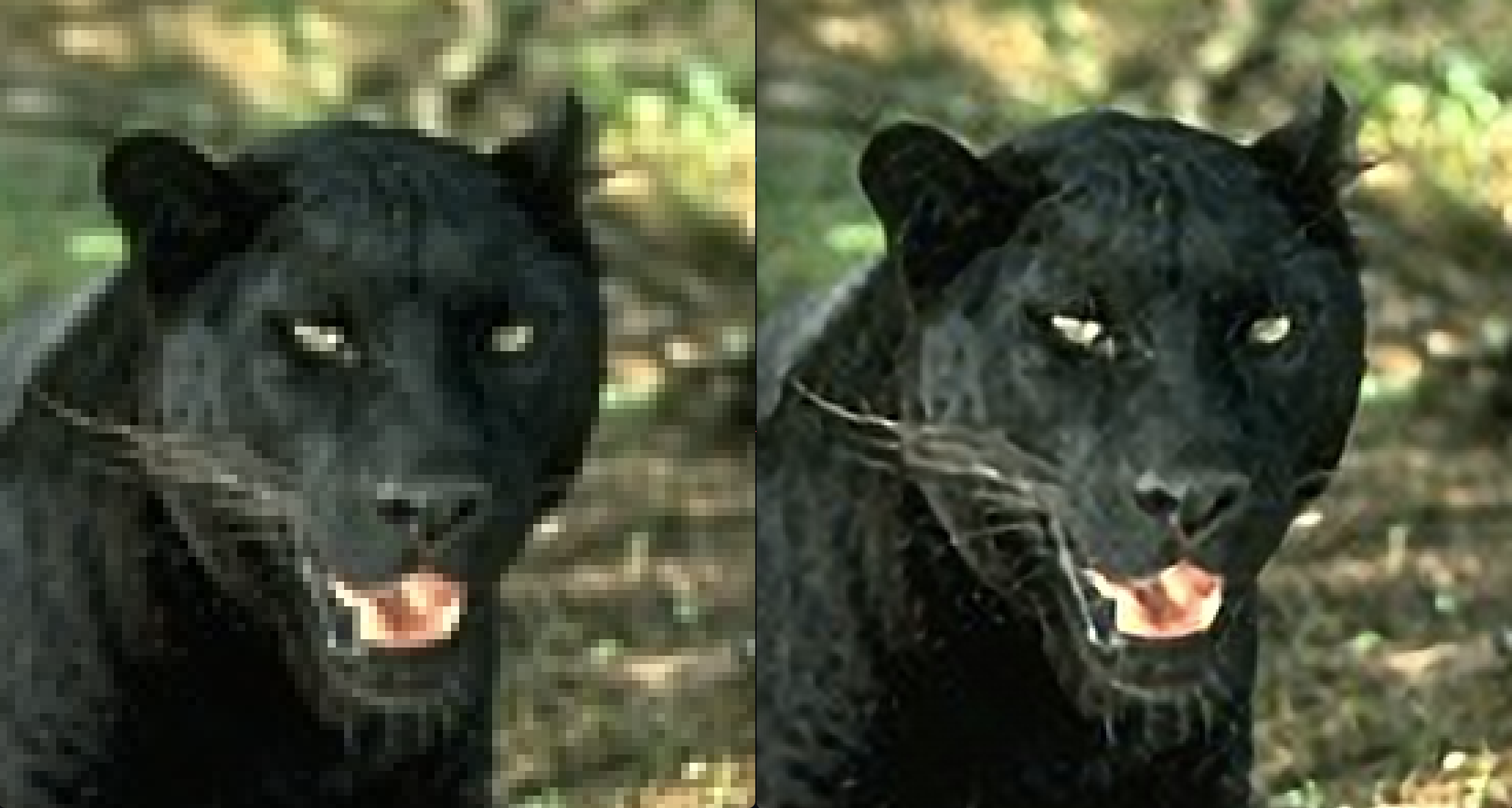 panther-side-by-side-1